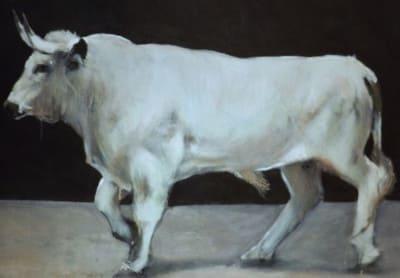 toro blanco de creta